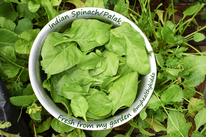 Indian Spinach Palak