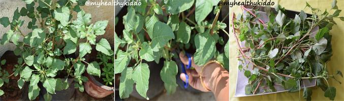 How to make arai keerai kadanja masiyal step-1